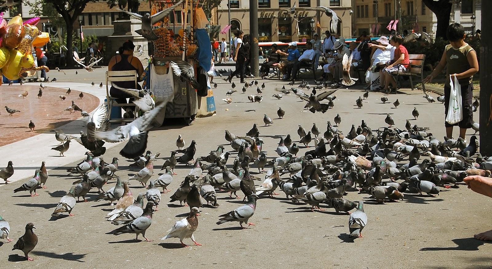 Alimentar-aves