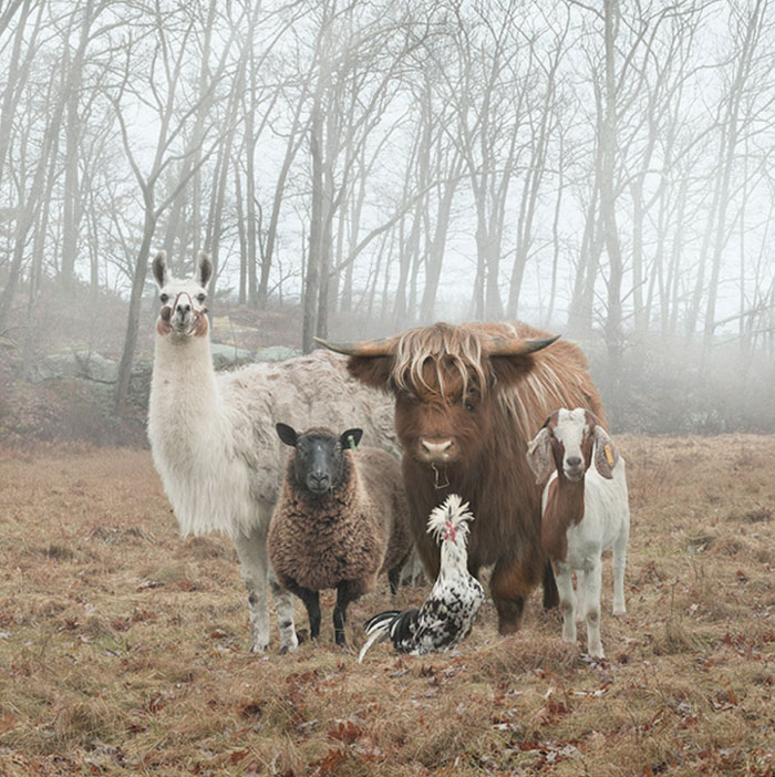 animals-about-to-drop-album-photos-58aeb2b30934d__700