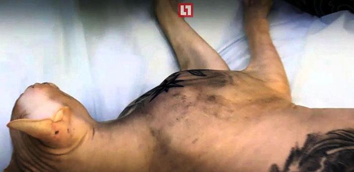 cat-tattoo-gangster-sphynx-aleksandr-russia-2a