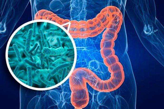 microbioma-1484311781