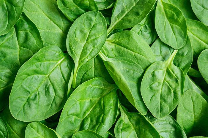 Fotos hojas de espinacas 9
