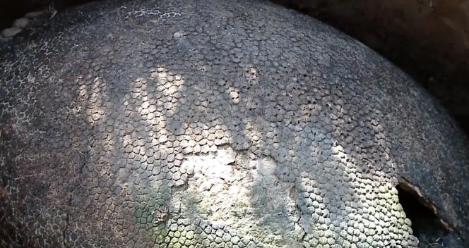 un-descubrimiento-de-mas-de-10-000-anos-de-antiguedad-tiene-locos-a-los-cientificos-en-argentina-1477482524