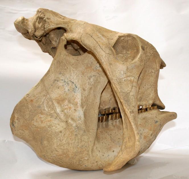 un-descubrimiento-de-mas-de-10-000-anos-de-antiguedad-tiene-locos-a-los-cientificos-en-argentina-1477484607