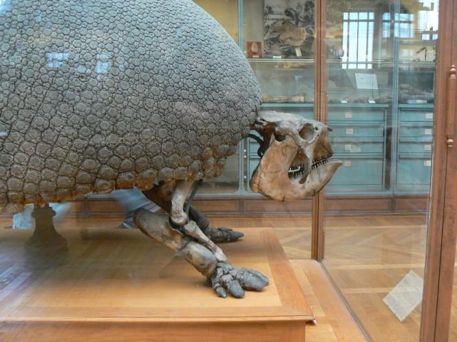 un-descubrimiento-de-mas-de-10-000-anos-de-antiguedad-tiene-locos-a-los-cientificos-en-argentina-1477488271