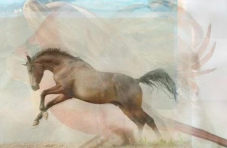 caballo-730x475
