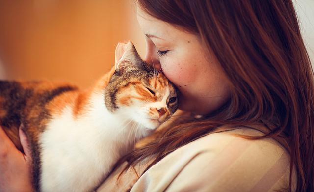 gato-amor-incondicional