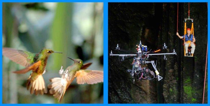 colibries-bonitos-730x368