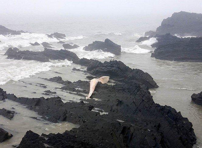 esta-criatura-ha-aparecido-en-una-playa-y-deberias-mantenerte-alejado-de-ella-1491205671