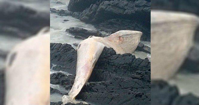esta-criatura-ha-aparecido-en-una-playa-y-deberias-mantenerte-alejado-de-ella-1491205701
