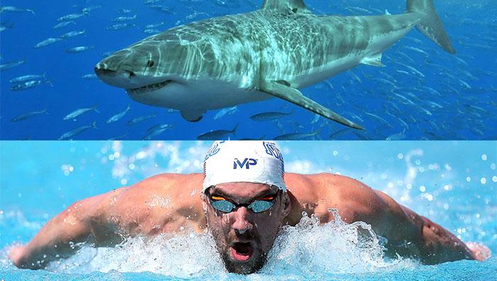 Phelps y el tiburn , por - Semanacom