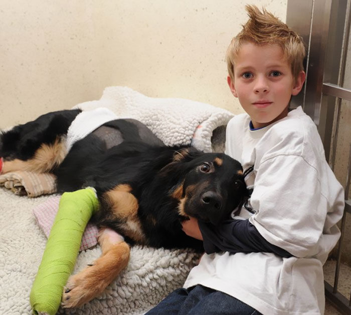 perros héroes, 23 perros héroes que sorprendieron a los humanos por su valentía
