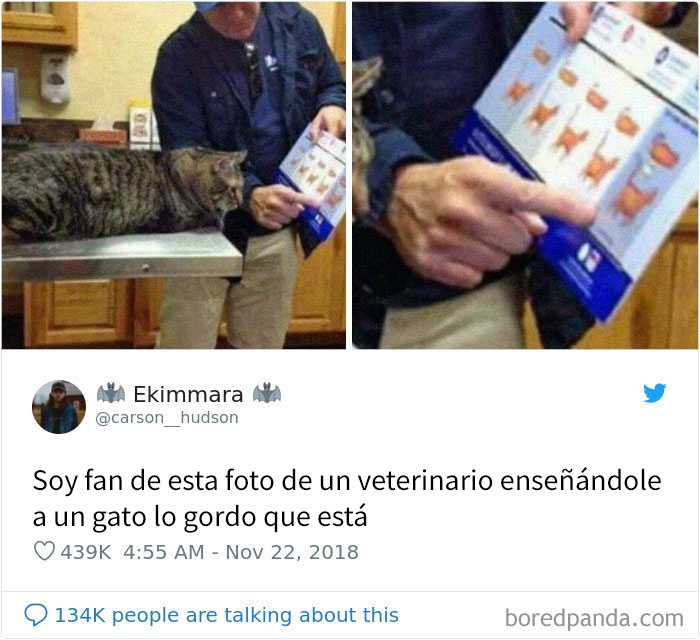 20 Divertidos tuits sobre gatos